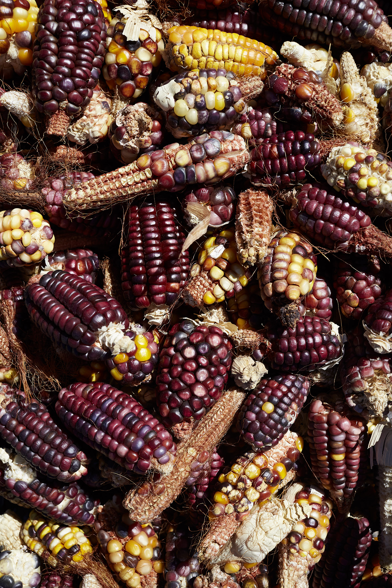 Katie Newburn | San Francisco Bay Area Food and Lifestyle Photographer | Oaxaca Heirloom Corn