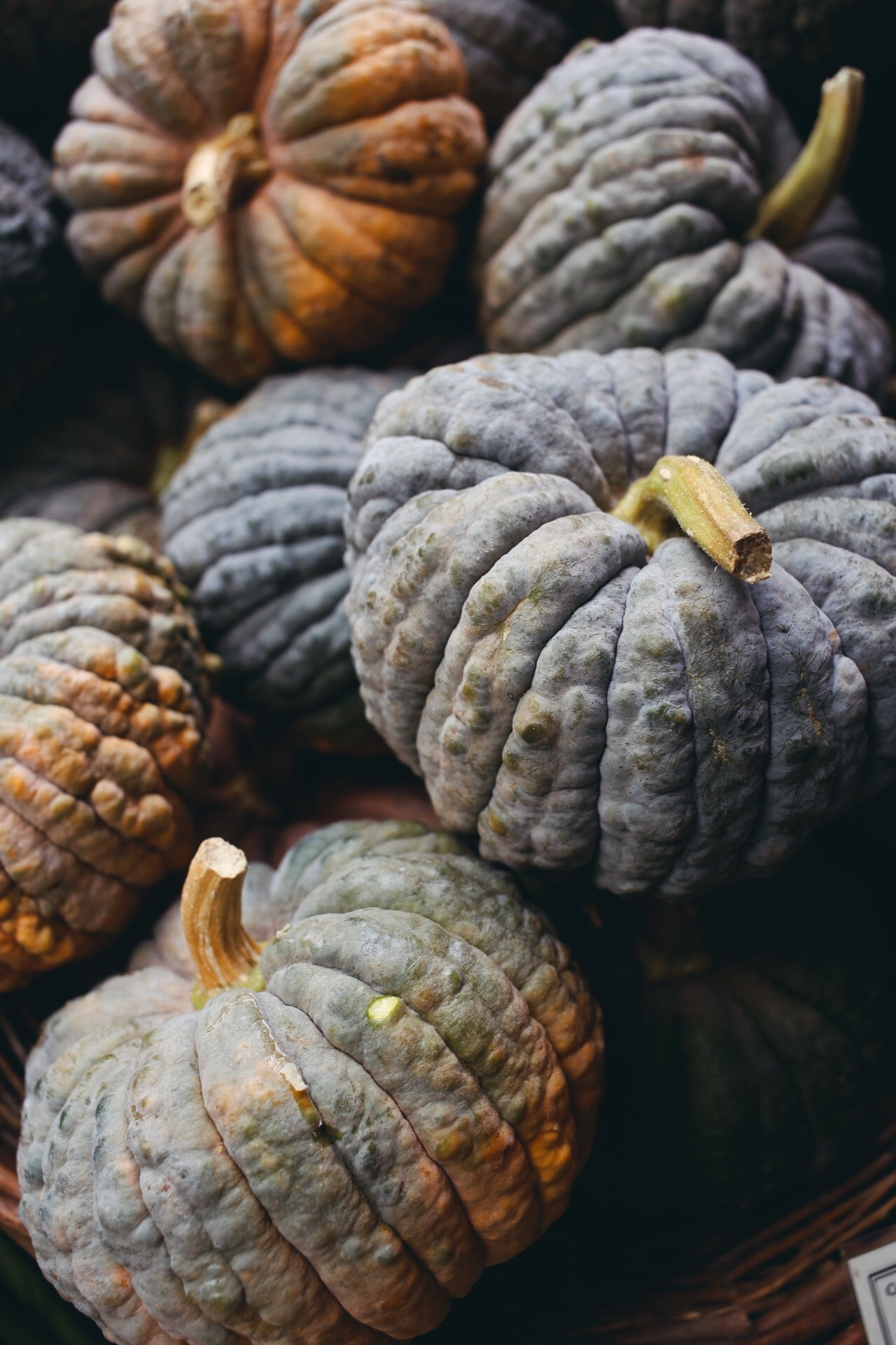 Katie Newburn | San Francisco Bay Area Food and Lifestyle Photographer | Winter Gourds
