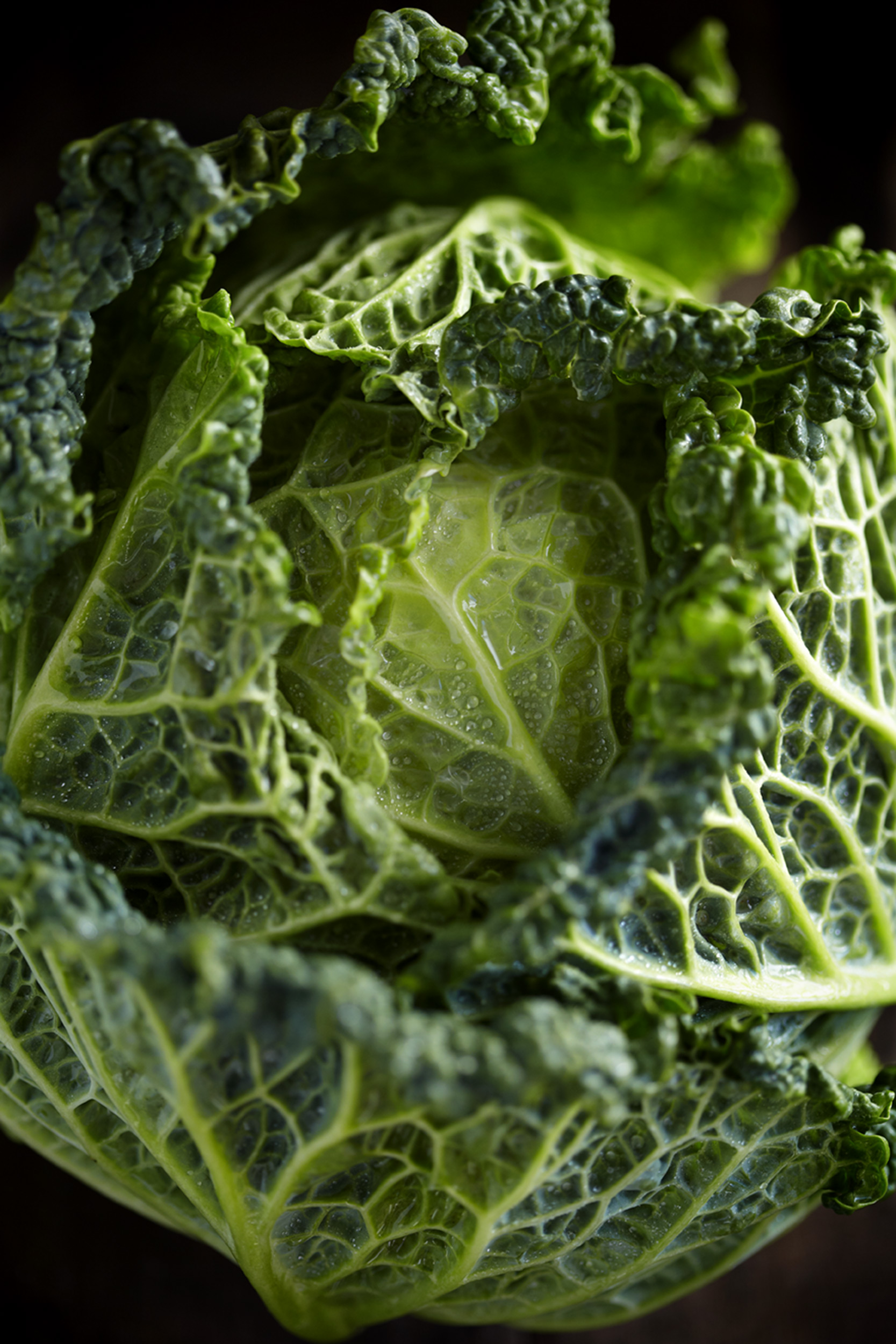 Katie Newburn | San Francisco Bay Area Food and Lifestyle Photographer | Cabbage